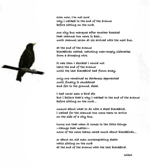 eugoly of a blackbird